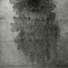 Kwiaty Jacaszek